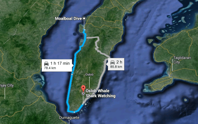 Moalboal Dive to Oslob Whale Shark Watching Google Maps