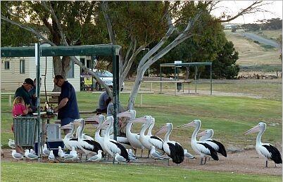 Reasons to never visit Australia