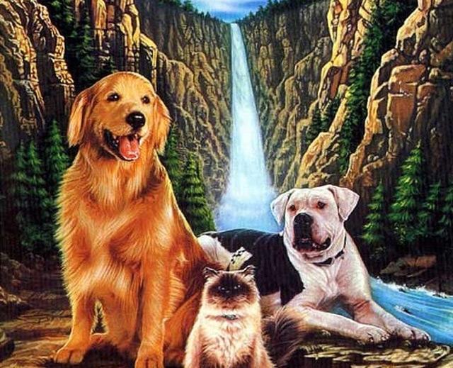 Best dog movie to watch Homeward bound