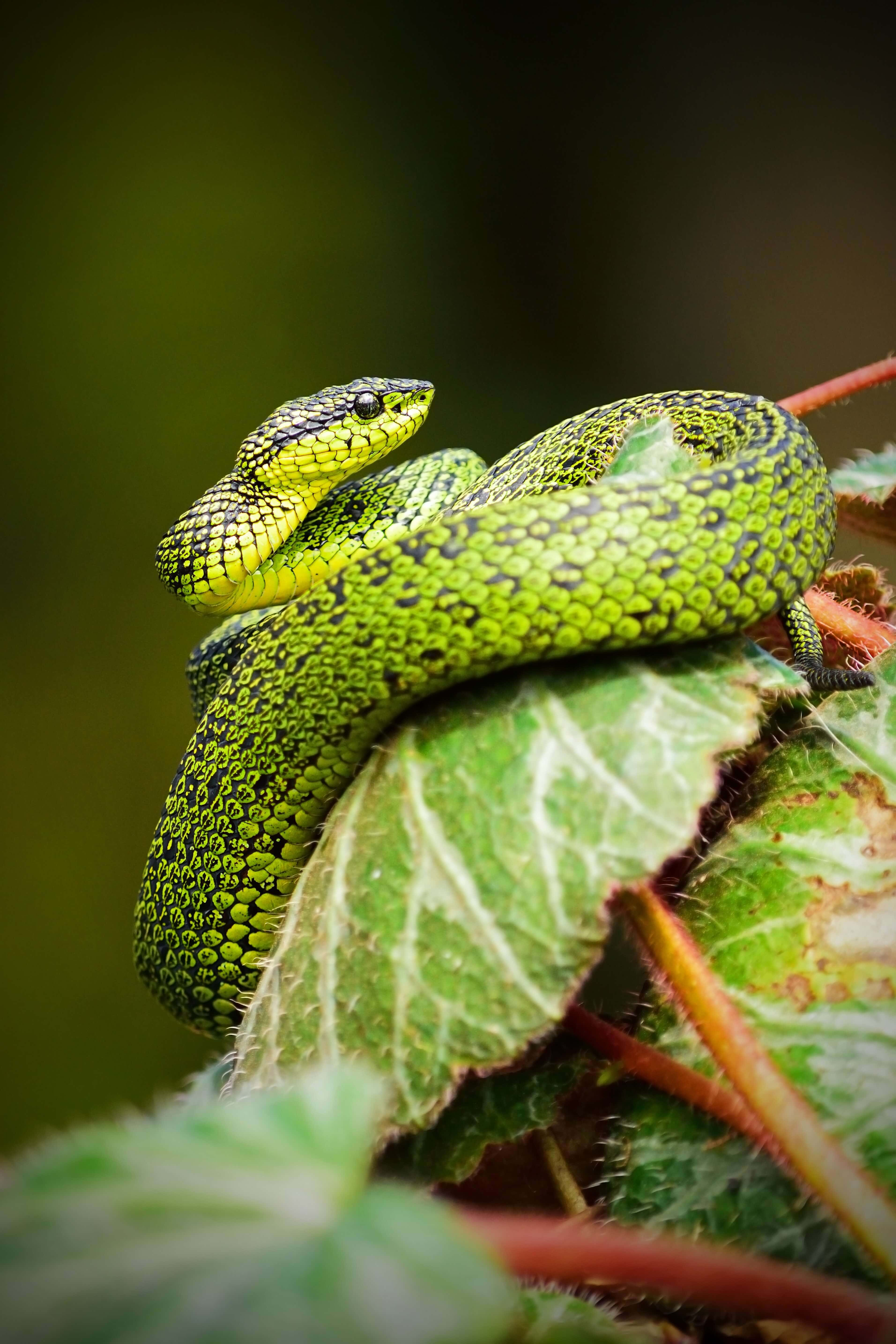 Moving to Australia? 20 of the worlds 25 deadliest snakes can be found in Australia